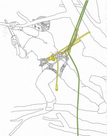 kurs do pracy na wysokości - Arborystyka